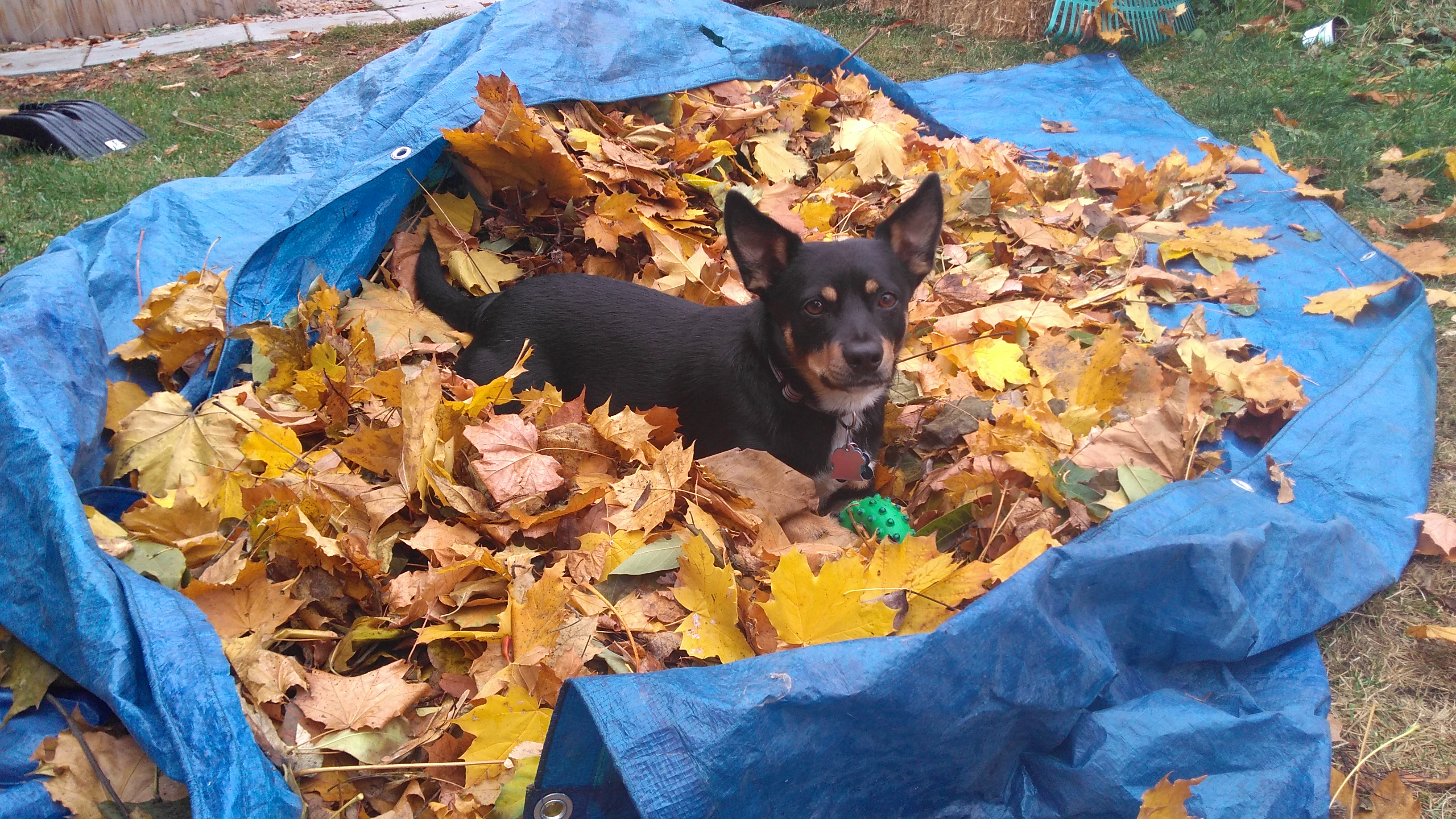 cody pile of leaves
